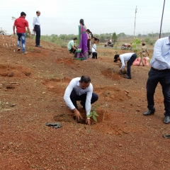 Tree  Plantation  by Staff